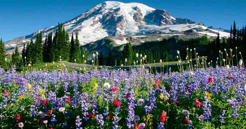 MountRainier-pic