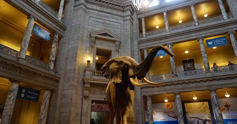 Museum-pic